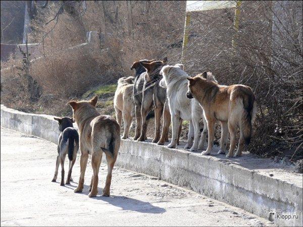 В Киеве появились собачьи маньяки